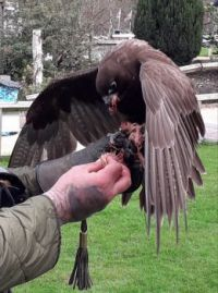 Meet the birds at Cheshire Falconry Centre