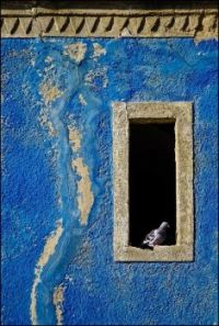 Blue Wall and Pidgeon