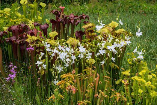 North Carolina Native Plant Garden