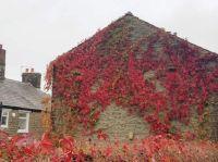 Autumn Coloures