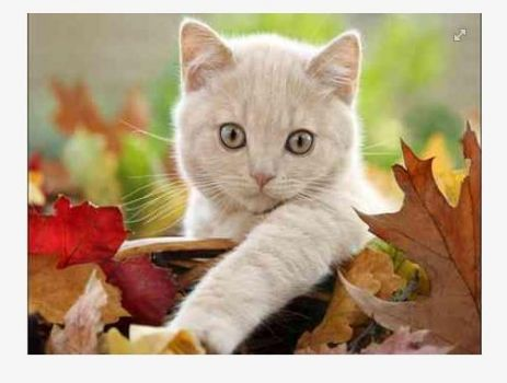 Autumn Leaves and Kittten