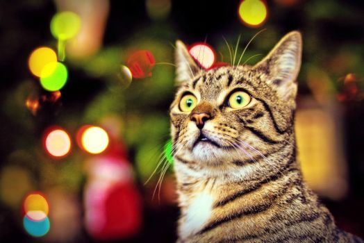 Holiday Bokeh by Samantha Decker on flickr