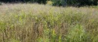 Grasses in the early fall