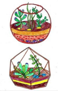 Terrariums From Coloring Book