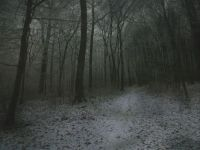 foggy forest trail --challenge