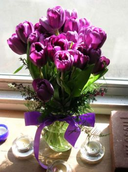 Purple Tulips......my #1 fav.