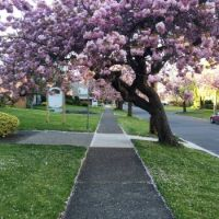 My neighbourhood in Spring