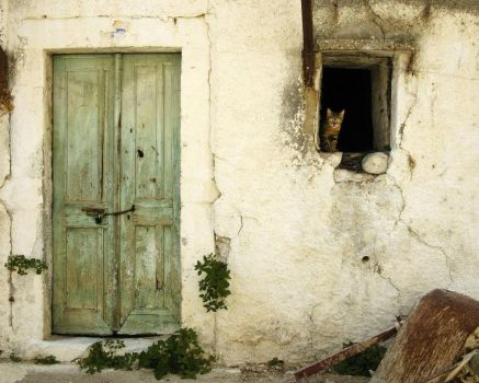 Kitty in an Abandoned House