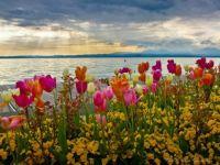 Záhon kvetin