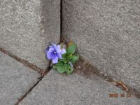 Flower from the concrete