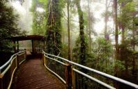 Dorrigo rainforest canopy walk