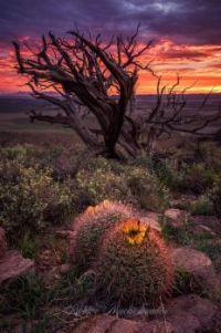 Southern New Mexico, Dona Ana County  6006