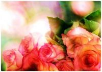 Beautiful Translucent Pink Roses