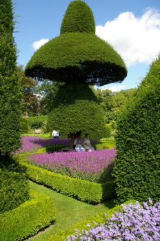 Topiary Garden at Levens Hall, Cumbria.  Photo by Alexander P Kapp