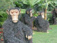 Grass Chimps