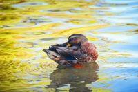 Ducky Bathtub Nature Style
