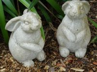 Cute bunnies in the garden