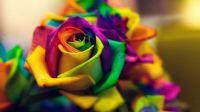 flowers-closeup-macro-colorful-wallpaper-preview