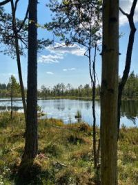 Trees by the tarn