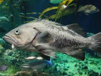Vancouver Aquarium 1