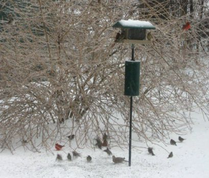 ice storm, 2/21/11 and a feeding frenzy