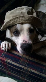 Whiskey in her Daddy's hat
