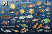Tropical fish Guide