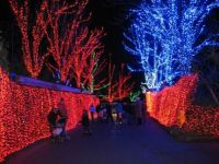 Zoo Lights Corridor