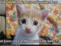 For Mama: Paranoid Kitten