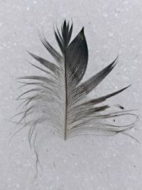 Feather (and fly) on the snow