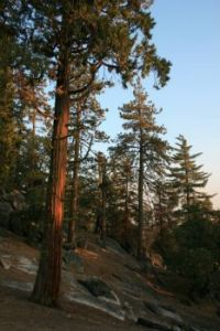Before dusk, Sequoia National Forest, California, USA