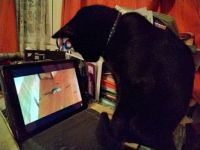 Mousewatching!