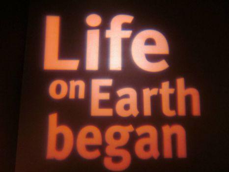 Y comienza la vida