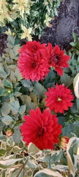 Flowers around town #2