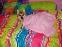 Good Night Puppy