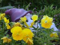 The gnome in the flower garden