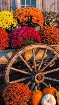 Abundance of fall