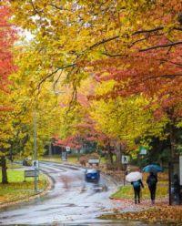 Fall Scenes #4