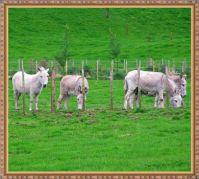 Little donkeys.