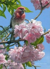 Feathered friend and pink blossoms