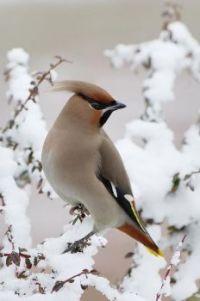 Mooi winters plaatje!