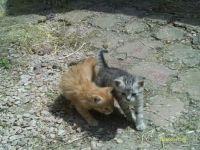 Naše koťata 14.6.2014