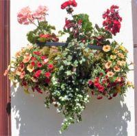 Garden wall basket