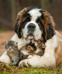A puppy dog and his kittens