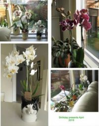 Collage of my birthday Orchids