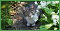 Brave explorer, outiside in the garden.