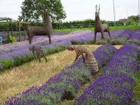 Willow figures at a Norfolk  Lavender Farm