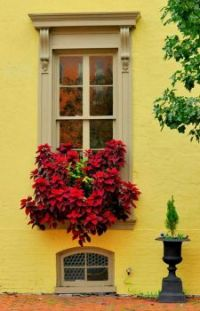Living Window Box