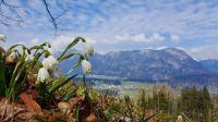 Mountain in Tirol