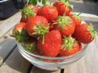 aardbeien2